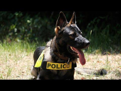 Dog saves police officer after men ambush him; Cop on leave after abuse of K9 - Compilation