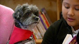 Собаки помогают детям мигрантов научиться читать (новости)