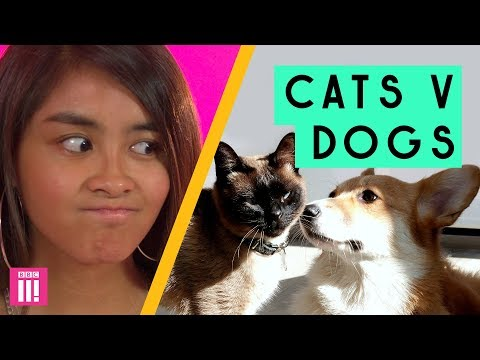 Cat People Vs Dog People: Who Wins?