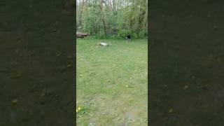 Kat siger sjove lyde til en anden kat funny video