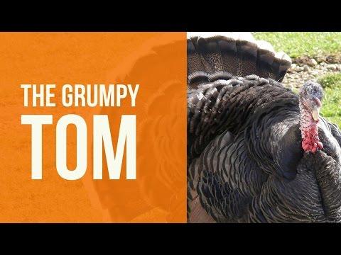 The GrumpyToms
