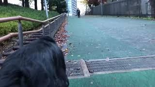 足腰が弱らないよう坂道トレーニングをするシニア犬。 帰ってからはお疲...