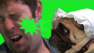 Pug Sneezes In Owners Face Repeatedly