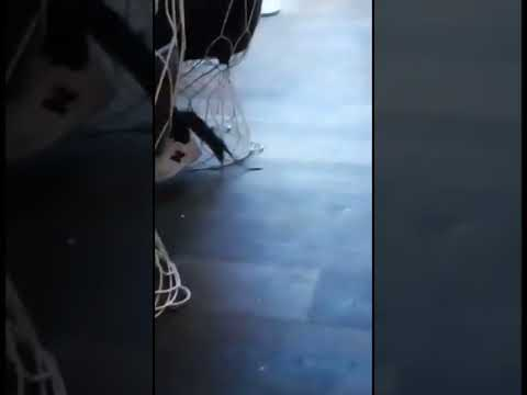 (WARNING)HUGE RAT - KILLED IN RESTAURANT IN PORTRUSH - RATHMORE WINE BAR please like and subscribe