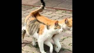 Кошачья песнь любви
