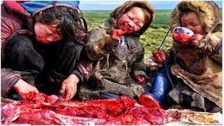 Зачем северные народы ПЬЮТ КРОВЬ оленей?
