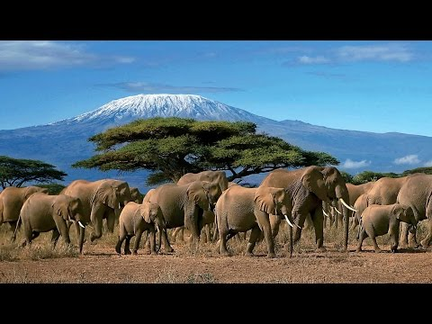 On Safari in Kenya & Tanzania with Vantage Travel: Up Close With the Big Five