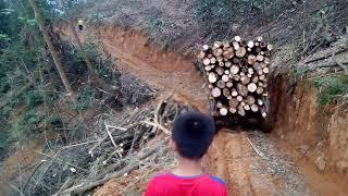 Bé xem công nông chở gỗ.