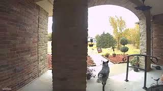 ヤツはハロウィンの大切なものを盗んでいきました。監視カメラがとらえたハロウィンの泥棒さん