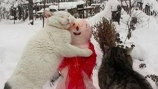 NEW PORTION OF LAUGH - Stunning FAILS and ANIMALS COMPILATION!