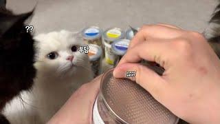 고양이동결건조 간식 종류별로 전부 먹방하기