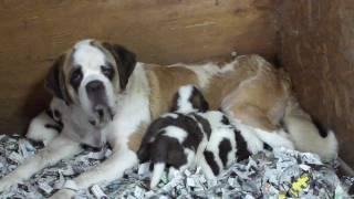 子犬が生まれていますよ http://www.woof.jp/sb.html.