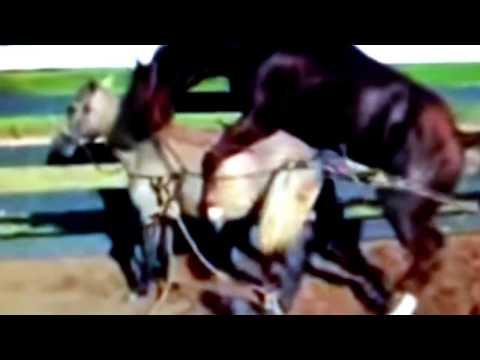 new video of breeding animals