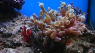Обслуживание морских аквариумов(http://akvariumsee.com/obsluzhivanie-morskih-akvariumov Если ухаживать за аквариумом у Вас нет времени, мы предоставим сервисное..., 2014-02-05T02:20:34.000Z)