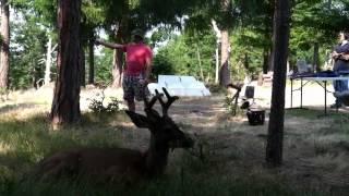 Dumbest Deer-Hunter in the world