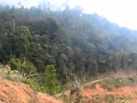 Malaysian Forest Destructed by Perak State Government Agency