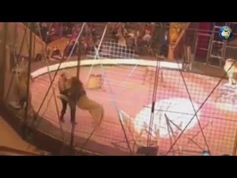 Лев напал на дрессировщика в луганском цирке