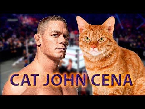 cats jumping on peoples heads! with John Cena music! so funny! try not to laugh!