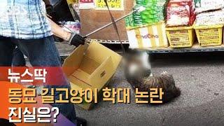 서울 동묘 길고양이 학대 사건 논란…진실은? / SBS…
