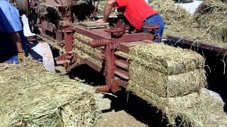 Baling hay the old fashioned way