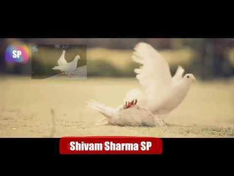 # 😭😭Heart Touching ##har Pal Teri Yaad Mujhe Tadpayegi Status Download By : Shivam Sharma Sp
