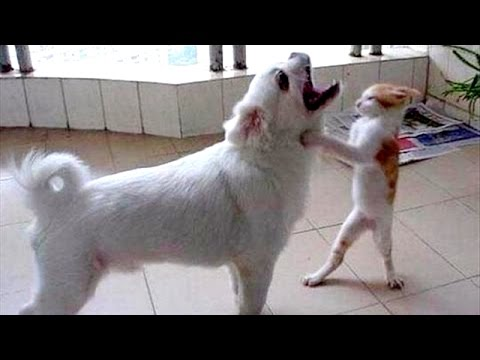 Super HARD TRY NOT TO LAUGH CHALLENGE – Funny ANIMAL compilation