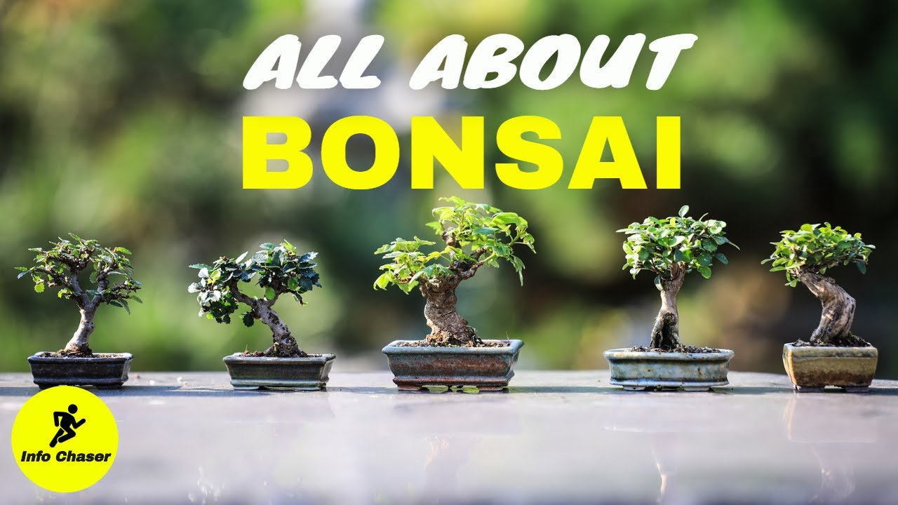 Download Bonsai trees for beginners | Bonsai tree making and care | how to make bonsai tree at home