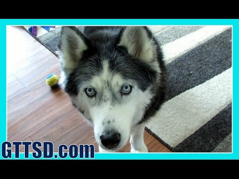 Hidden camera captures hilarious dog behavior | Snow Dog Short 40 | Oakley