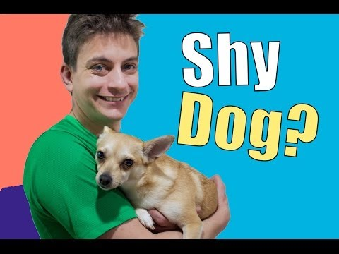How To Teach a Shy, Fearful, or Nervous Dog!