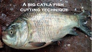 Amazing Cutting Fish | Fastest Catla Fish Cutting | Big Carp