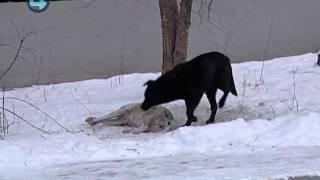 Бездомных собак отравили