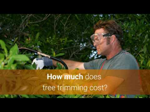 tree-trimming-cost-&-price-guide