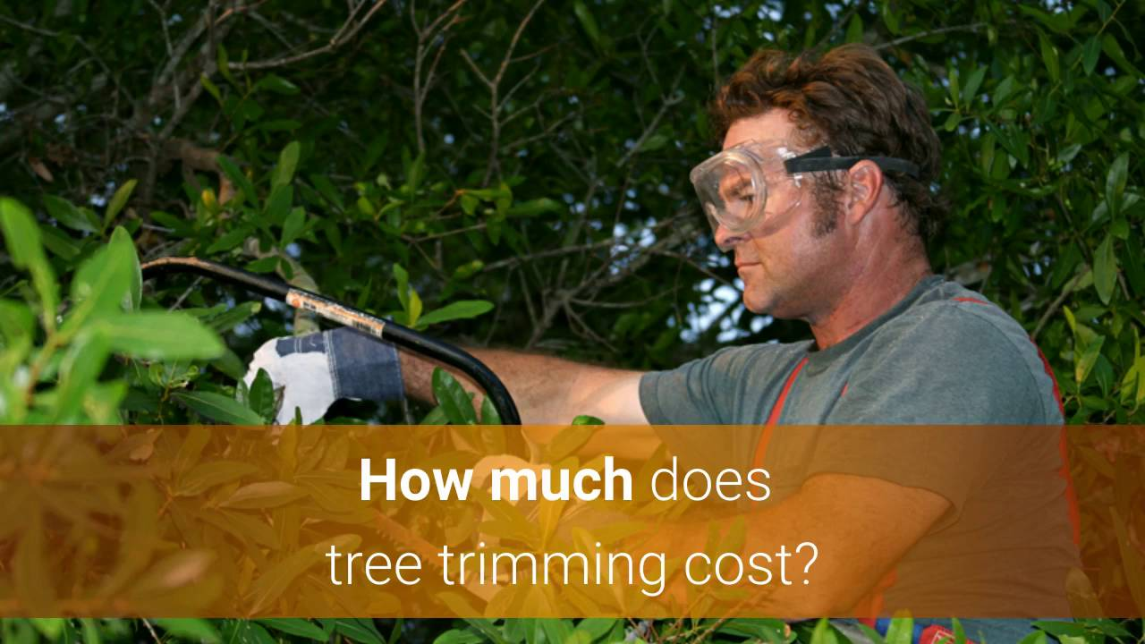Tree Trimming Cost & Price Guide - YouTube