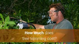 Tree Trimming Cost & Price Guide