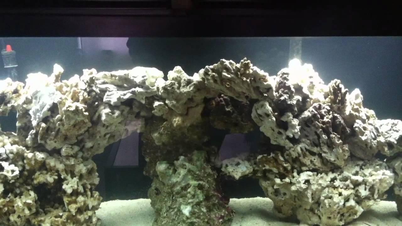 55 Gallon Pukani Aquascape Youtube