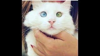 Топ 20 фото невероятной дружбы кошки и собачки)))