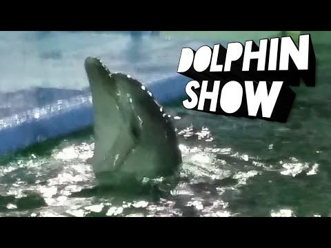 Dolphin Show Maritime Museum | Karachi Sindh Pakistan |