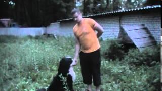 Школа дрессировки собак. Как запустить собаку