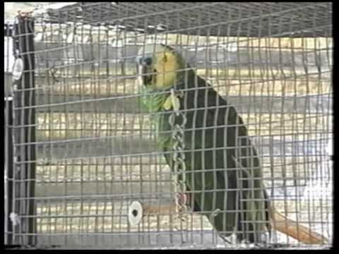 Part One of Wild At Heart: Exotic Birds and the Pet Trade