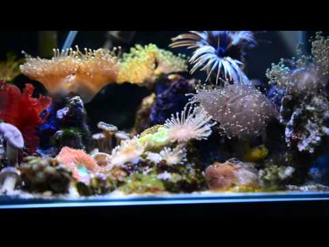 Fluval Edge 5 gallon Nano reef tank