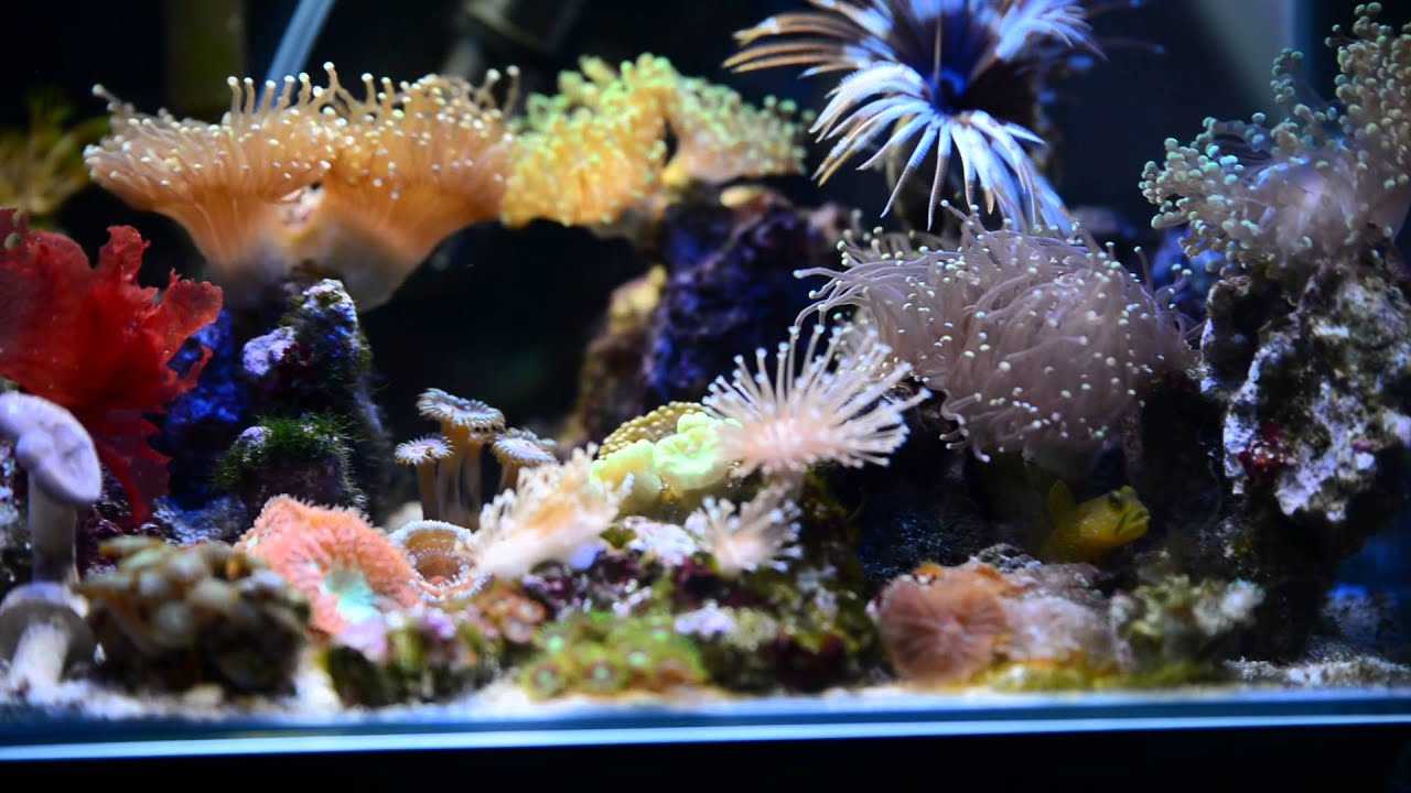 Fluval Edge 5 Gallon Nano Reef Tank Youtube