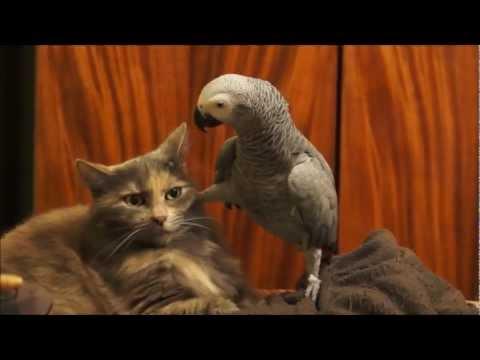 Parrot annoys cat