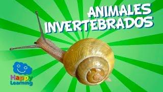 Animales Invertebrados   Videos Educativos para Niños