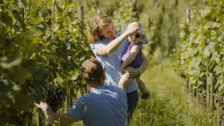 Cultivating vines through the lens of a pilot    S...