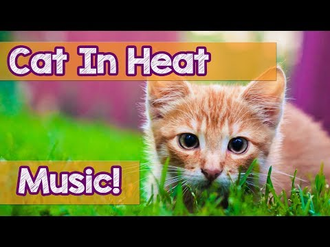 How To Calm My Cat In Heat! This Is The Best Music To Help Relax Your Cat During Heat! Soothing!