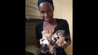 7 kitten!