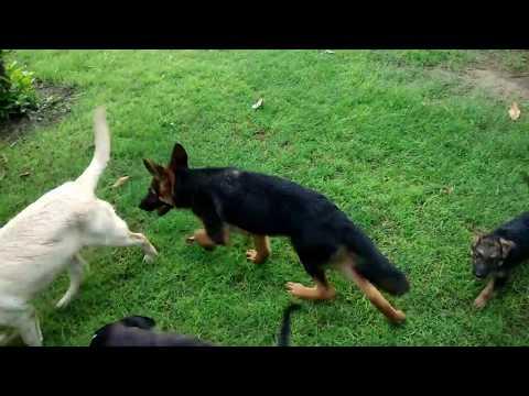 Dog Farm - Dog House - Best Dog Food - DOGGYZ WORLD