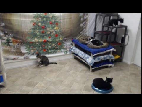Blind Cat Rescue And Sanctuary Inc