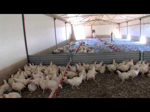 The Stock Merchant presents Glenloth Free Range Chicken
