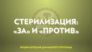 """Стерилизация (часть 1): """"за"""" и """"против""""."""